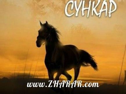 Қазақша Фильм: Сұңқар телехикаясы (Трейлер)
