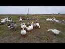 Закрытие летнего сезона на озере Сугояк 2