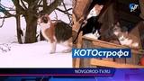Девятнадцать хвойнинских котиков ищут новый дом