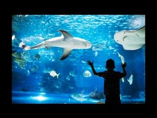 Океанариум: как живется рыбам вдали от моря