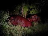 Жестокая борьба бегемотов в Национальном парке Крюгера. 15 января 2010 - Часть 1 (Vicious and deadly hippo fight in Kruger Natio