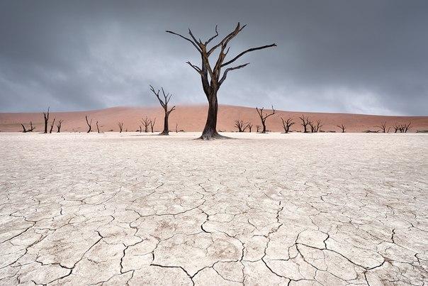 Деревья в Мёртвой долине, Пустыня Намиб, Намибия
