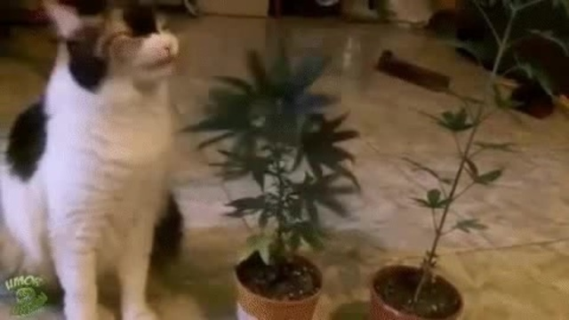 Кот-наркоман ))