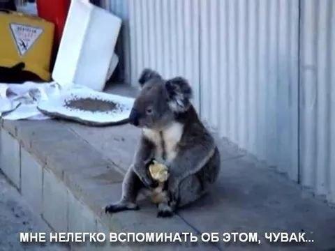"""При непонятной ситуации - ложитесь спать. Визит Путина на саммит """"Большой двадцатки"""" в ФОТОжабах - Цензор.НЕТ 5206"""