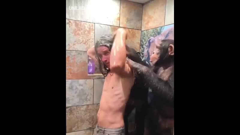 Обезьянки и душ!