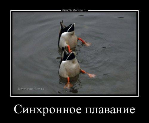 смешные картинки