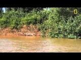 Ягуар и крокодил NAT GEO WILD