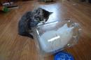 Котёнок любит прятаться в этой банке, а его брат всегда в замешательстве, когда видит такое…