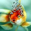"""наша группа """"Золотая рыбка"""" детский сад № 24"""