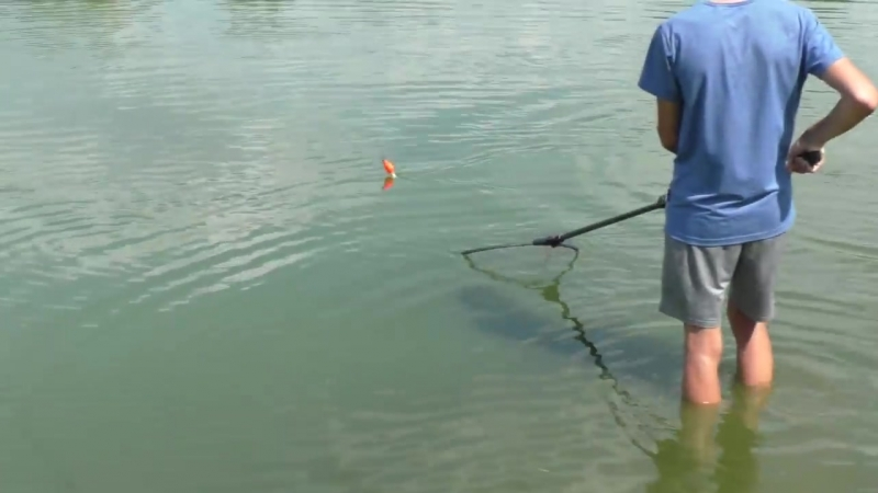 Толстолобы выскакивают на берег и клюют на сгущенку. My fishing