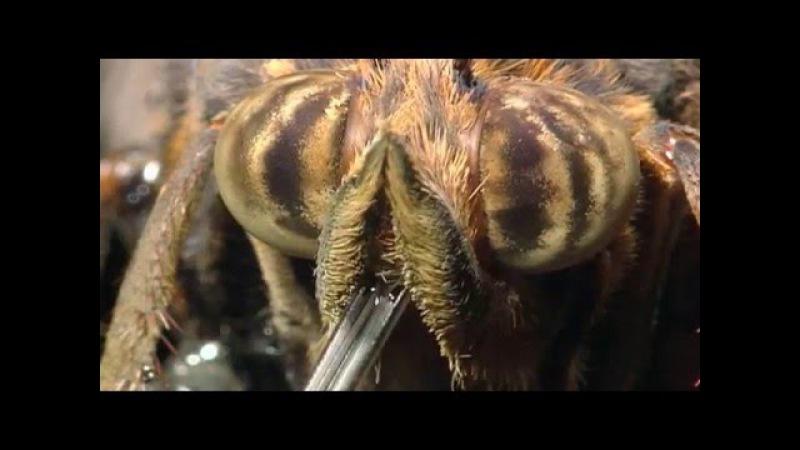Маленькие монстры. Документальный фильм о животных 12 » Freewka.com - Смотреть онлайн в хорощем качестве