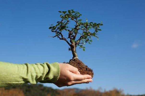 Москвичи присоединятся к высадке деревьев в своих дворах