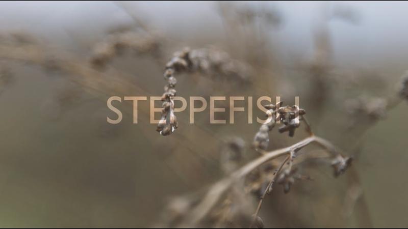 STEPPEFISH - Остаются | qazaq indie | ün | Almaty