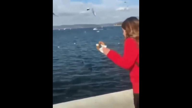 зачем чайкам смартфон?