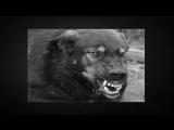 [Мистика рядом с нами .] Мистическая история:Дьявольская псина