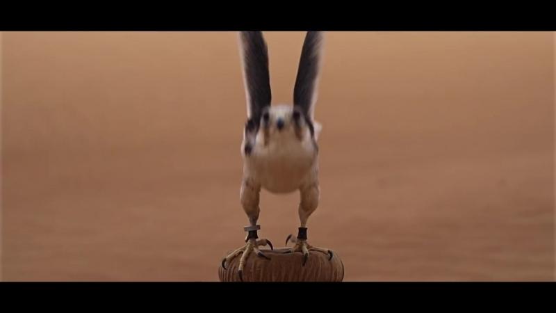 Полет сокола в замедленной съемке в Дубаи