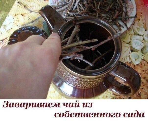 Завариваем чай из собственного сада. Такие полезные веточки!