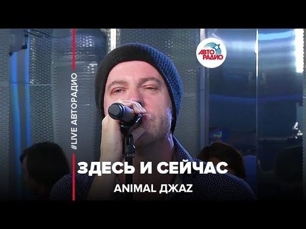 Animal ДжаZ - Здесь и Cейчас (LIVE Авторадио)