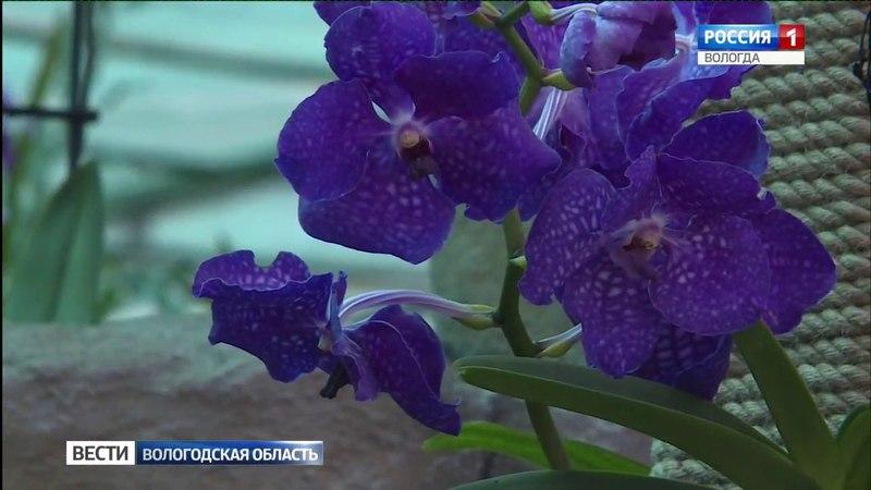 Музей орхидей открылся в Вологде