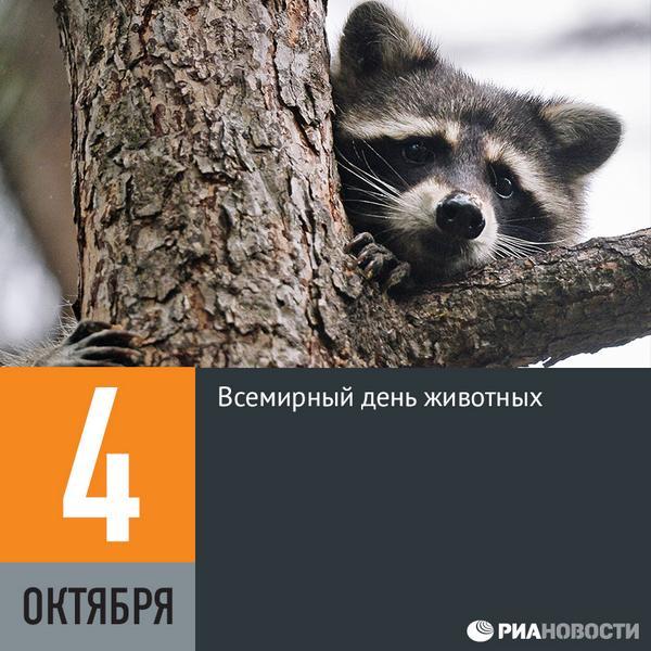 картинки всемирный день животных4окт