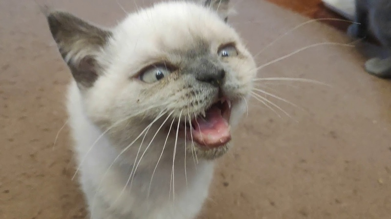 Котенок усвоил команду голос.