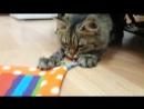 Неугомонный кот или 30 минут из жизни Вуди.