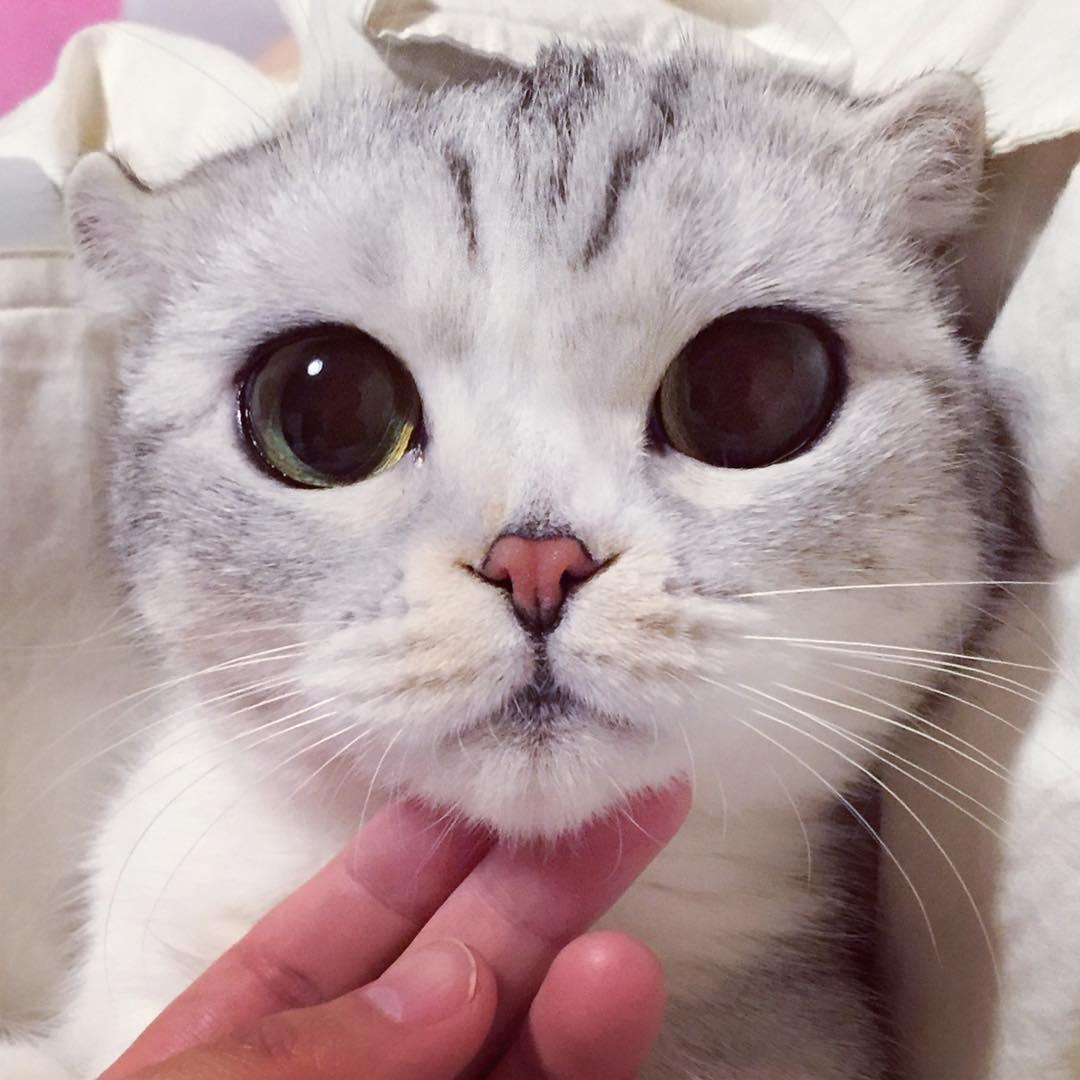 Фото котика няшки на аву