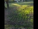 Плешивые лужайки в парке Южное Бутово