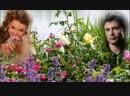 Иван-чай - трава. исп. Анна Сизова. Автор ролика Лариса Воеводина