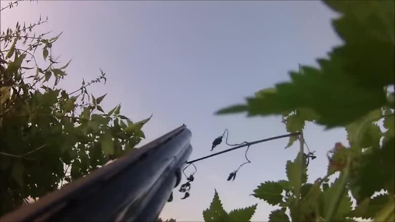 100 schoten duiven kraaien eenden ganzen hazen 100 killshots.mp4