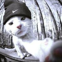 Кот в найке