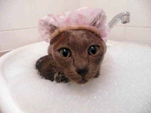 Можно ли котам купаться