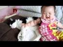 猫の子守.mpg     Nursing of a cat