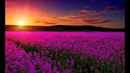 Relaxing Music For Emotional Healing Detachment from Negativity Boost Happiness Inner Peace