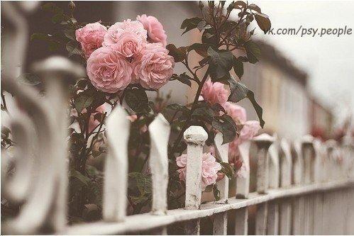 Никогда не теряй терпения — это последний ключ, открывающий двери. Антуан де Сент-Экзюпери