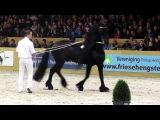 Onne 376/Stallion show Leeuwarden 2012