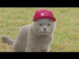 Приколы с котами – смешная озвучка животных – кот Мурзик Попробуй не засмеяться от Domi Show.mp4