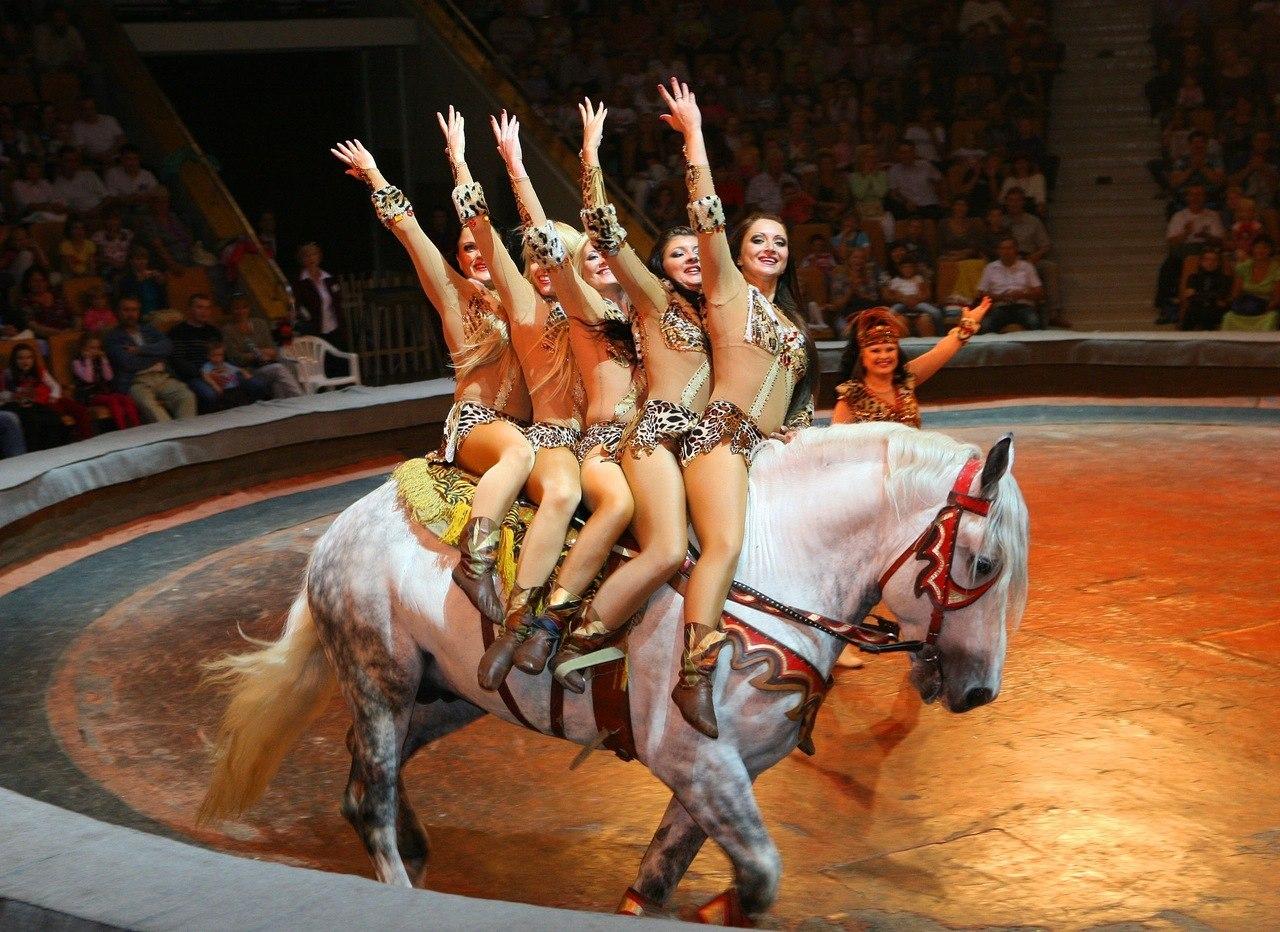 Эротические моменты в цирке 19 фотография
