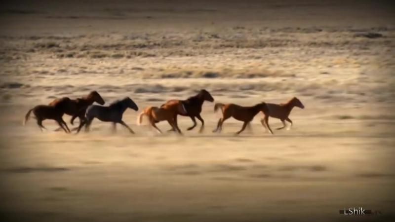 Музыка индейцев Эквадора Лошади