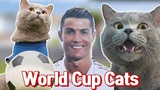 'World Cup Cat' Aaron's Animals NEW VIDEO COMPILATION 2018