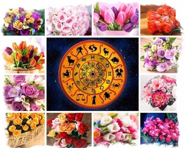Талисманы цветы для знаков зодиака