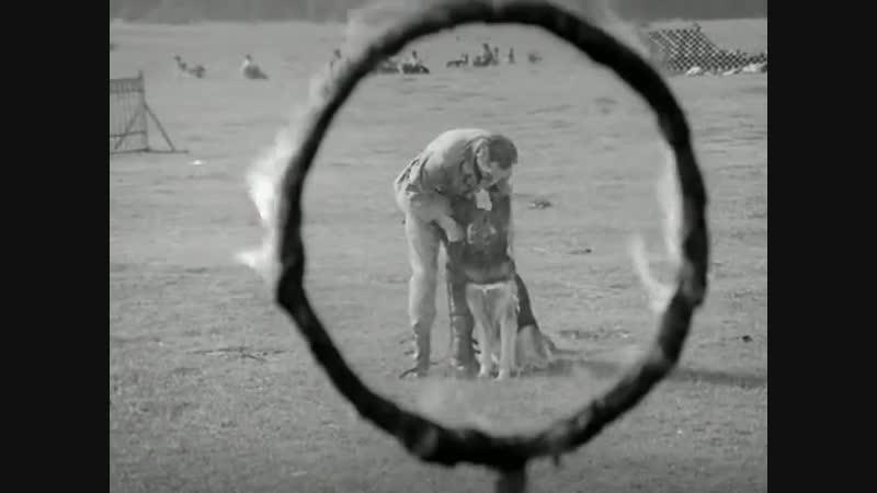Приключения пса Цивиля 2 серия (1968г)