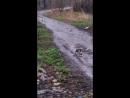 Лыткаринские Утки на прогулке