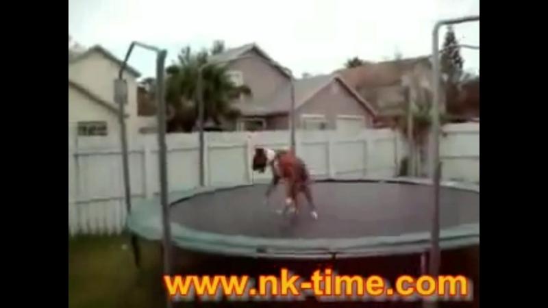 Bobkinz - Asshole Dog [Teaser]