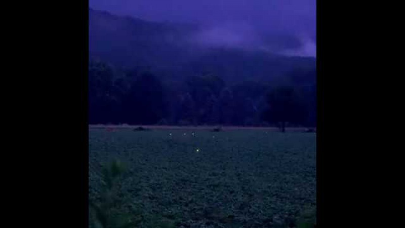 Spectacular Firefly Encounter in Rural Pennsylvania