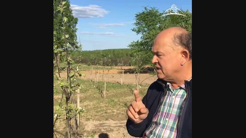 Доктор наук поделился секретами выращивания экологически чистых яблок!