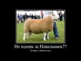 Навальный   сторонникам