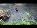 Давид купается на плотине горной реки Псырдзха Абхазия