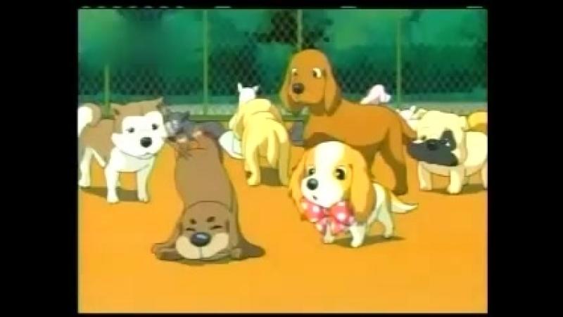 Perros Afortunados - Capitulo 33 - El valor que me dieron mis amigos 1 - 2