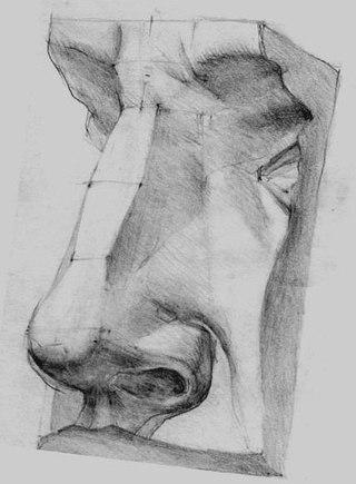 изображения-схемы носа и